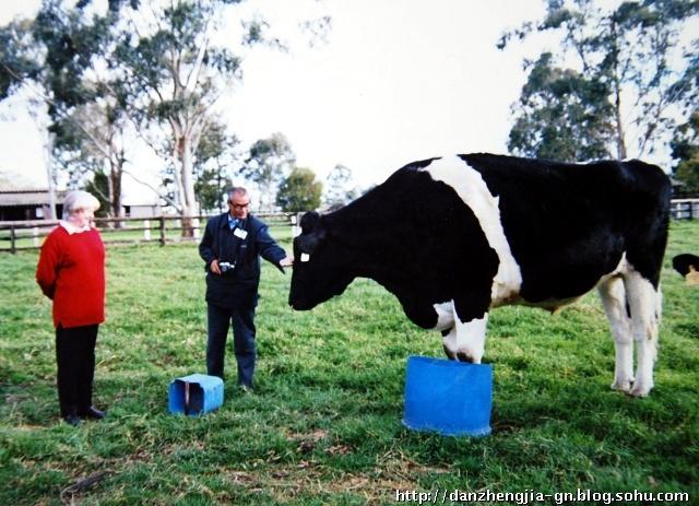 牛输液部位图解