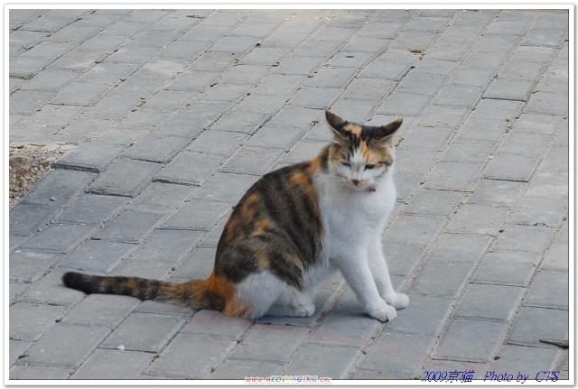 三色猫_可爱的长尾巴三色猫(七九八艺术园区)
