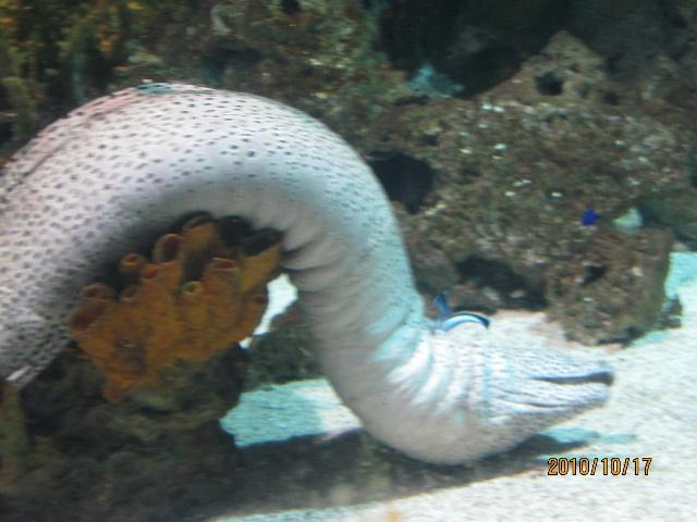 北京动物园海洋馆-石家庄市-手机搜狐社区