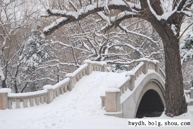 下雪后的松树简笔画