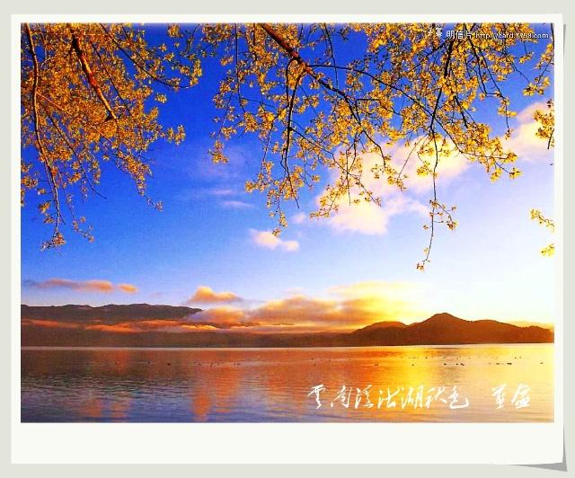 一颗落叶大树卡通图片