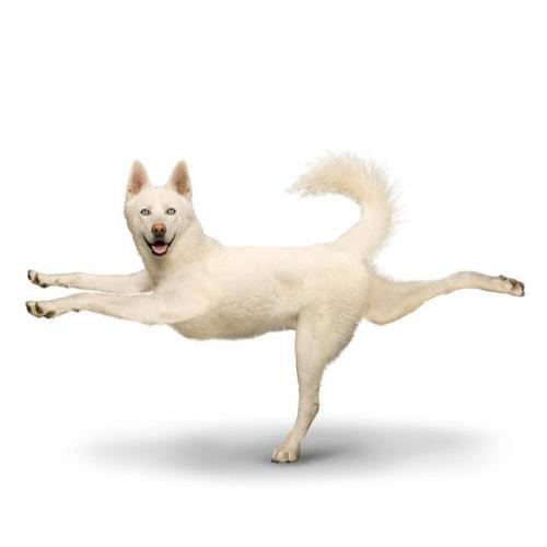 狗狗做瑜伽-清茶-我的搜狐
