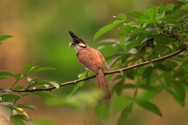 壁纸 动物 鸟 鸟类 雀 640_426