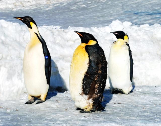 可爱的小企鹅-老乐的海边小屋-我的搜狐