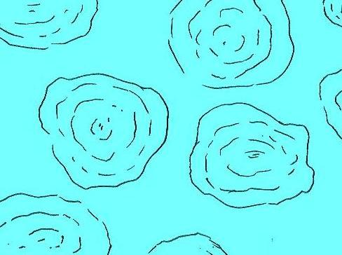 横切面  显微鲕状纹结构素描图