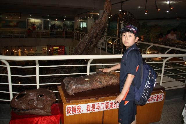 馆徽(pmc logo)中国古动物馆的馆
