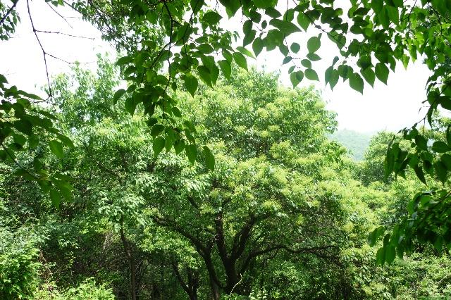 国家森林公园-丁香谷